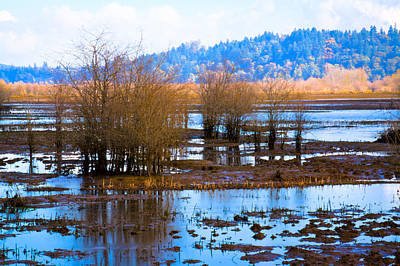 Music Figurative Potraits - Nisqually Wildlife Refuge P6 by David Patterson