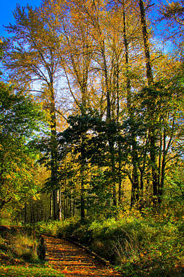 Photograph - Nisqually Wildlife Refuge P9 by David Patterson