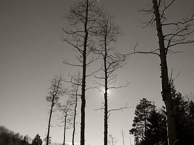 Photograph - Nm Series - Bare Tree Sky Black And White by Kathleen Grace