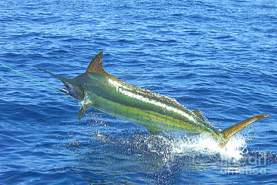 No. 02 Marlin Hooked And Leaping In The Air Art Print by Merton Allen