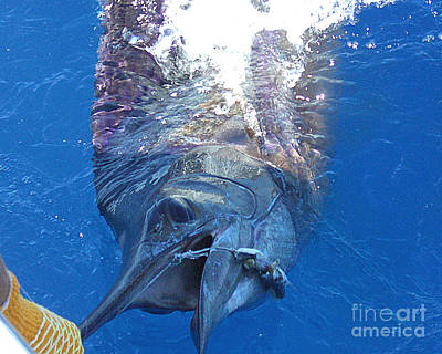Photograph - No. 08 Marlin's Bill Is In One Hand by Merton Allen