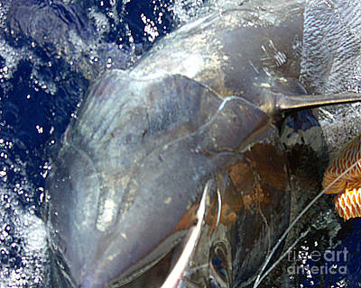 Photograph - No. 10 Marlin Struggling But I Won't Let You Go by Merton Allen