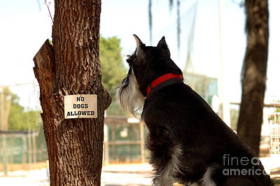 No Dogs Allowed Art Print