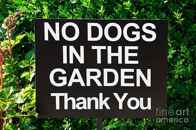 No Dogs In The Garden Thank You Art Print by Andee Design
