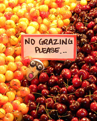Photograph - No Grazing Please by Mark J Seefeldt
