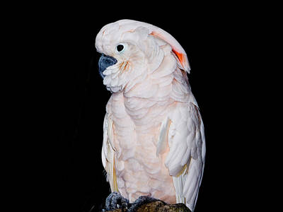 Photograph - No Ordinary Parrot by Chua  ChinLeng