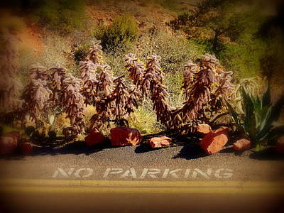 Photograph - No Parking by Cindy Wright