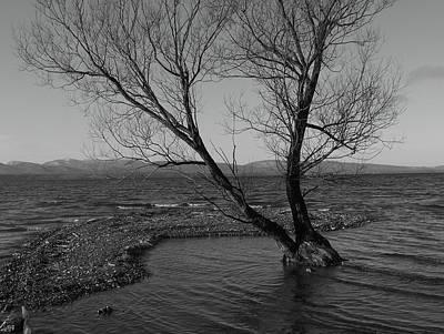 No Tree Is An Island Art Print by Jeff Moose