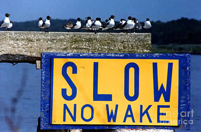 Photograph - No Wake The Seagulls by Susan Stevenson