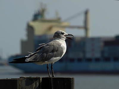 Photograph - Nola Gull - 1 by Jeffrey Peterson