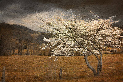 Photograph - North Carolina Dogwood In Spring by Gray  Artus