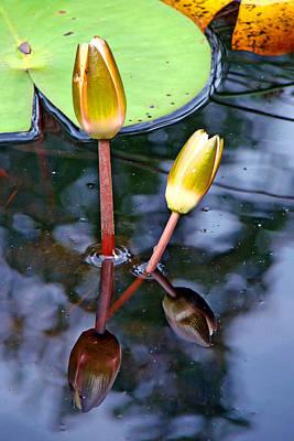 Photograph - North Carolina Lilies I by Diana Douglass