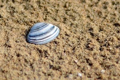 North Sea Photograph - North Sea Shell by Catherine Murton