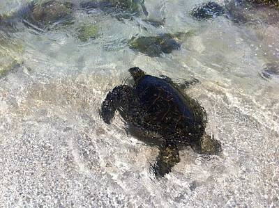 Photograph - North Shore Turtle #2 by Erika Swartzkopf