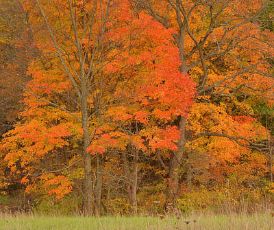 Of Autumn Photograph - Northeast Fall Colors by Stephen  Vecchiotti