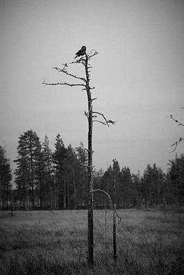Olympic Sports - Northern Hawk-Owl by Jouko Lehto
