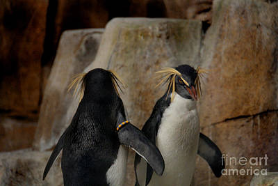 Photograph - Northern Rock-hopper Penguin by Lee Dos Santos