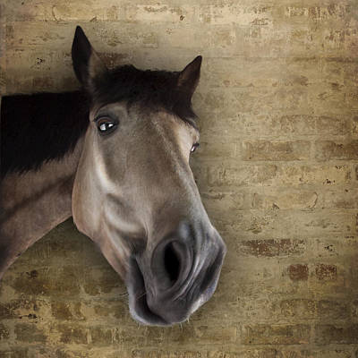 Photograph - Nosey Horse Begging For Carrots by Ethiriel  Photography