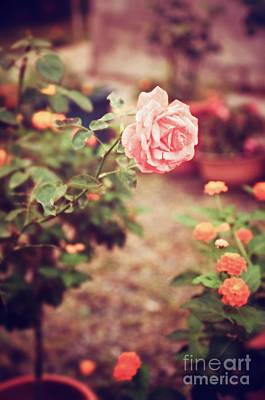 Photograph - Nostalgic Pink Rose by Silvia Ganora