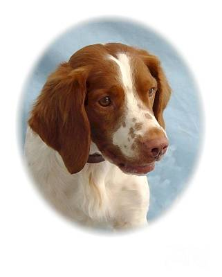 Retriever Digital Art - Nova Scotia Duck Tolling Retriever  23 by Larry Matthews