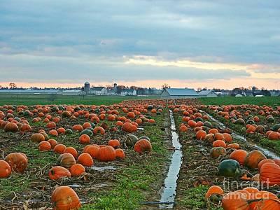 Photograph - November Pumpkins by Craig Leaper