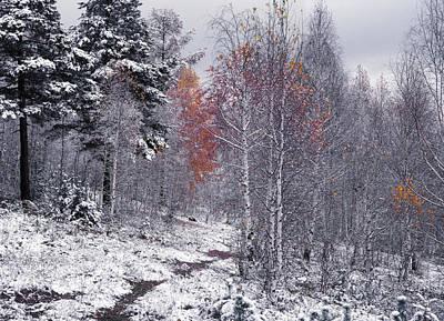 Photograph - November by Vladimir Kholostykh