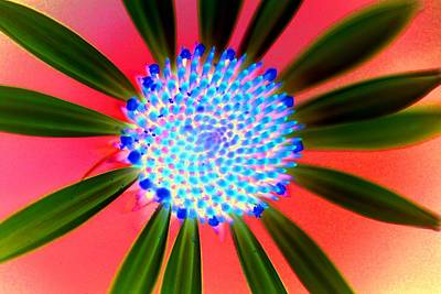 Photograph - Nuclear Flower by Rdr Creative