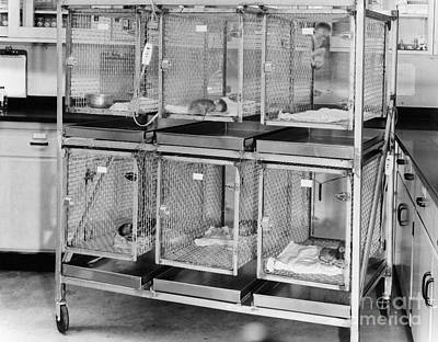Behavioral Photograph - Nursery Cages by Science Source
