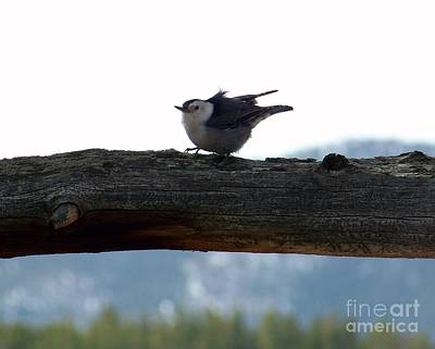 Photograph - Nuthatch by Dorrene BrownButterfield