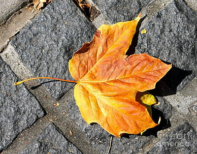 Photograph - Oak And Brick by Pamela Walrath