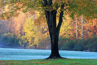 Photograph - Oak And Forest In Fall Time by Emanuel Tanjala