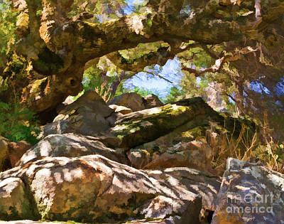 Oak Canopy Art Print