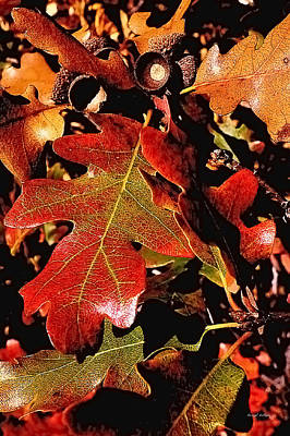 Oak Colors Art Print by Darryl Gallegos