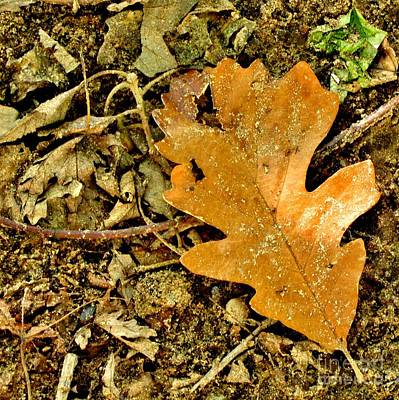 Photograph - Oak Leaf by Marilyn Smith