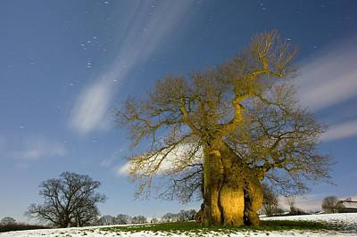 Snowy Night Photograph - Oak (quercus Robur) by Bob Gibbons