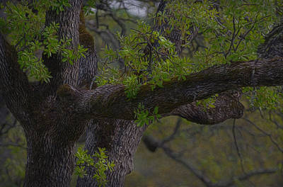 Photograph - Oak Tree - Spring by Gary Rose