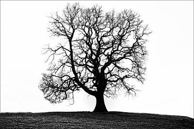 Oak Tree Original