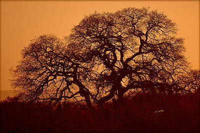 Oak Tree At Sunset Art Print