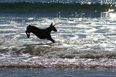 Doberman Photograph - Ocean Leap by Renae Laughner