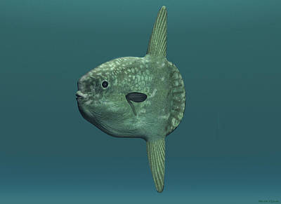 Digital Art - Ocean Sunfish by Walter Colvin