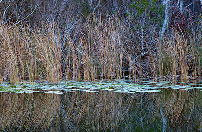 Photograph - Ocklawaha River Reflection by Ronald Broome