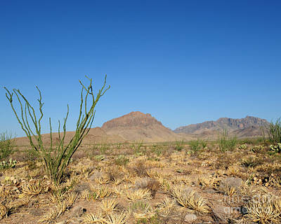 Photograph - Ocotillo And Mountain by David Chalker