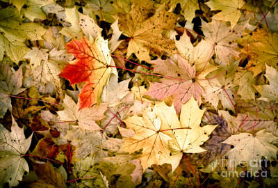 Photograph - October Carpet by Alexander Kunz