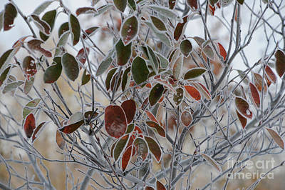 October Frost Art Print by Linda Seacord