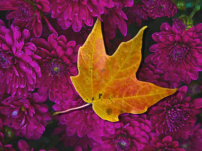 Fallen Leaf Digital Art - October Hues by Paul Wear