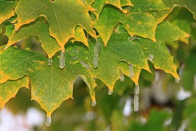 October Icy Ornaments Original