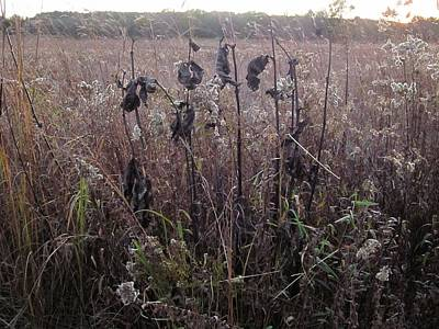 Photograph - October Milkweed And Goldenrod by Sherry Oliver