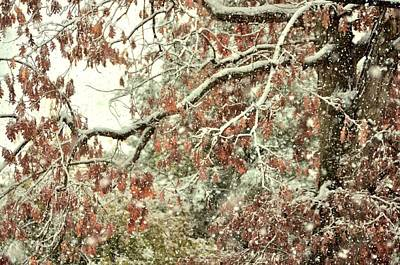 Photograph - October Snowstorm by JAMART Photography