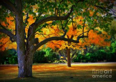 Webster Park Photograph - October Trees 2 by Perry Webster