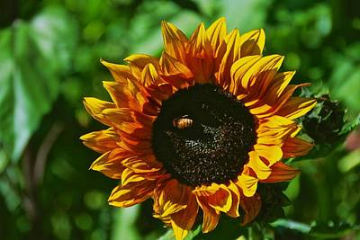 Photograph - October's Sunflower by Eric Tressler